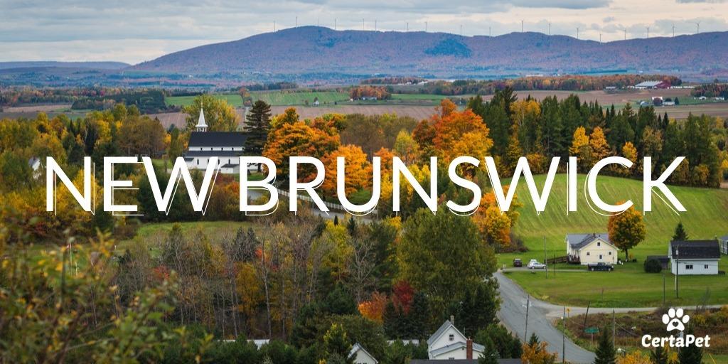 New Brunswick Công Bố Kế Hoạch Tìm Ứng Viên Định Cư Cho Tỉnh Bang